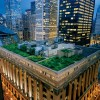 Native prairie grasses and wildflowers grow atop a green roof on the Chicago City Hall building, in downtown Chicago, IL. Chicago is the greenest city in the United States.