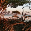 23759A-208 - Red Mangrove Trees & Oyster Bar, Indian Key Pass, Ten Thousand Islands, Everglades National Park, FL