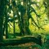 510-3 - Hoh Rain Forest, Olympic National Park, WA