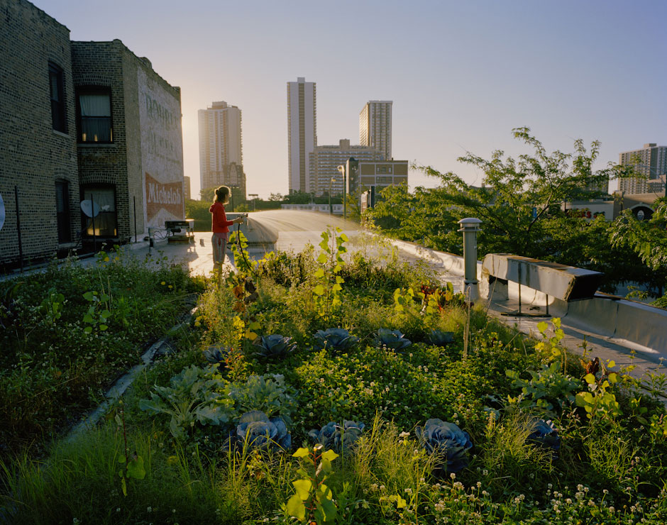 Green Roofs. National Geographic. Photo By Nina Subin
