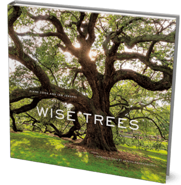 wise_trees_cover