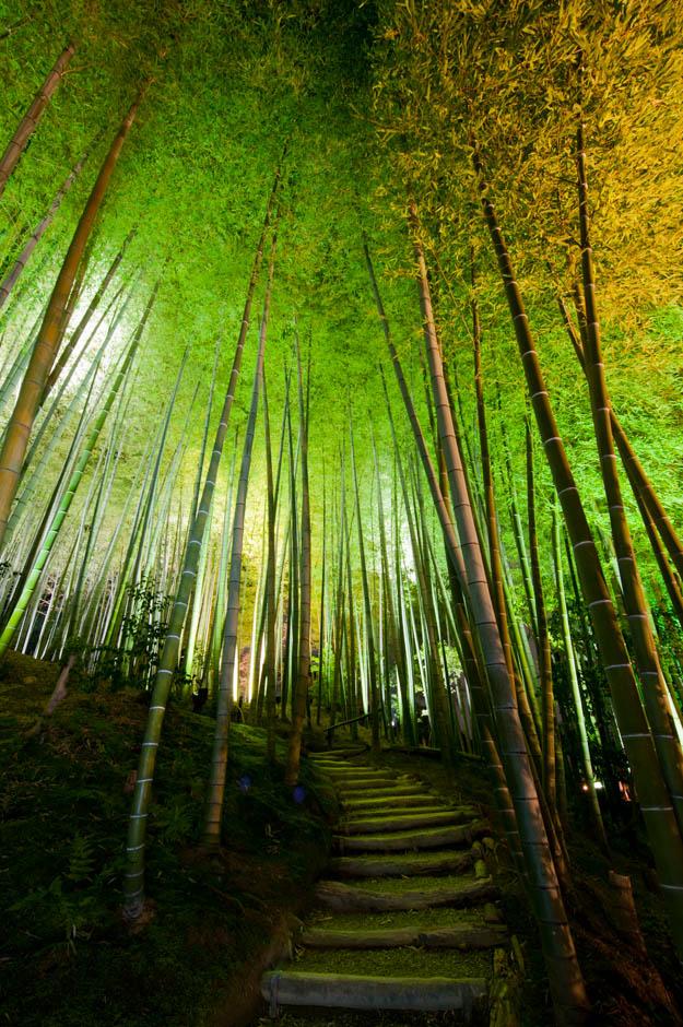 Night Gardens Cook Jenshel Photography